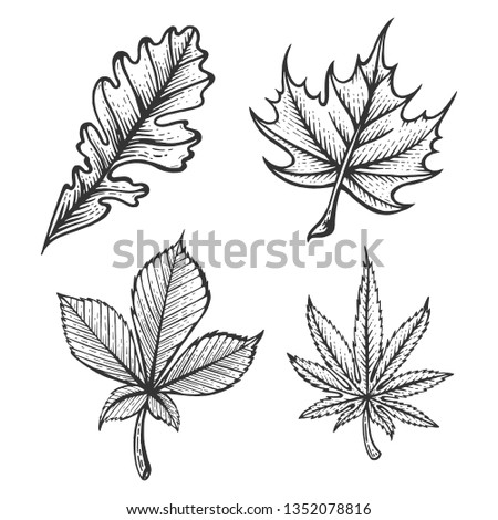 plant chestnut oak maple