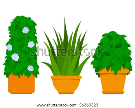 Plant collection indoor - Agave - vector design elements