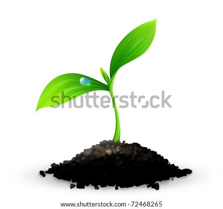 plant  10eps