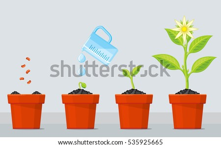 plant growing stages timeline