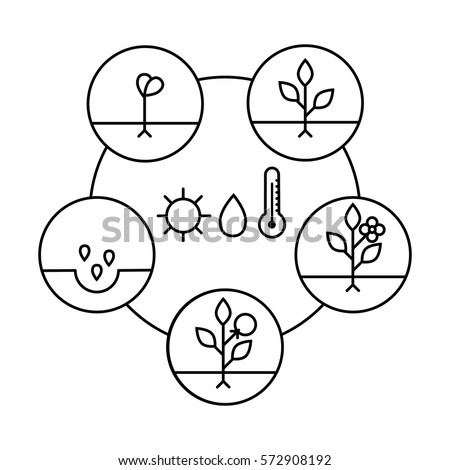 plant growth stages line art