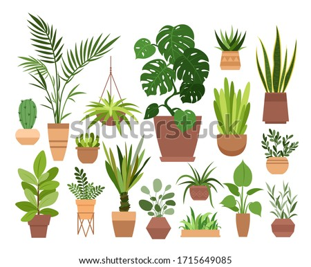 Plant in pot vector illustration set. Cartoon flat different indoor potted decorative houseplants for interior home or office decoration, green garden floral collection icons isolated on white Stock foto ©