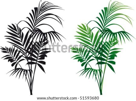Plant Kentia vector