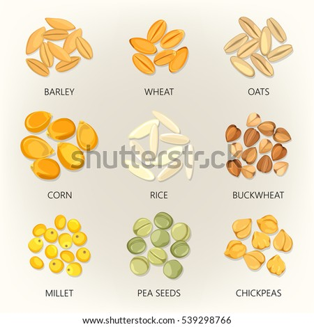Plant seeds isolated icons. Barley and wheat, common oat and corn, rice and buckwheat, millet and pea, chickpea. Grain and beans of different agricultural species. Cereal harvest and vegetarian theme