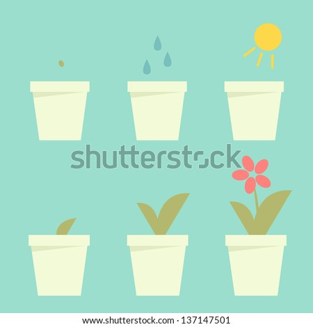 Planting flower info graphic vector