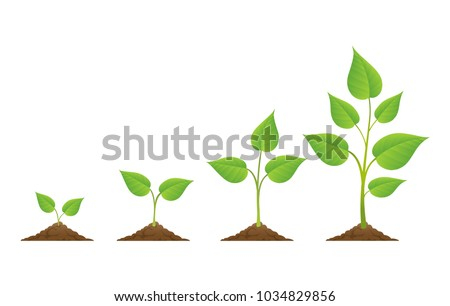 planting plants grow isolated