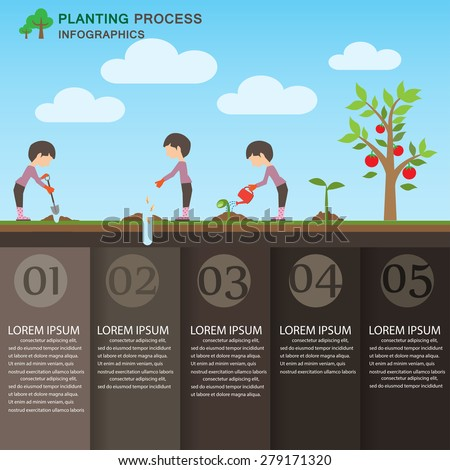 planting process infographic