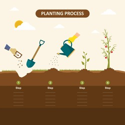 Planting seed sprout in ground. How to grow tree from the seed in the garden easy step by step. Apple tree, gardening seedling plant. Vector infographic concept of planting process in flat design