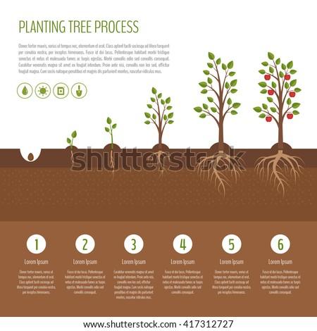 Life Cycle Of Apple Tree Free Image 354250250