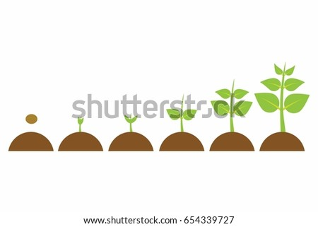 plants growing in the pot from small to big, set of illustrations with phases plant growth, plant growing in soil