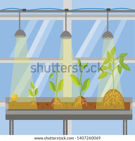 Plants in Greenhouse Flat Vector Illustration. Sprout Growing Process and Phases. Seed in Soil. Roots in Ground. Cultivation Technology. Saplings on Table under Lamp Indoors. Hothouse Windows