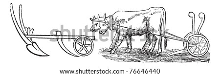 Plough, vintage engraving. Old engraved illustration of a type of Plough being pulled by water buffalos. Trousset encyclopedia.