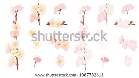 plum flower vector setpeach