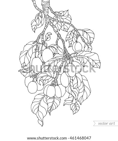 plum tree branch vector