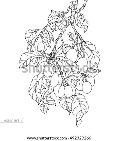 plum tree branch vector
