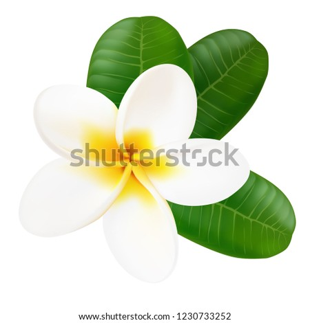 Plumeria. Exotic flower.