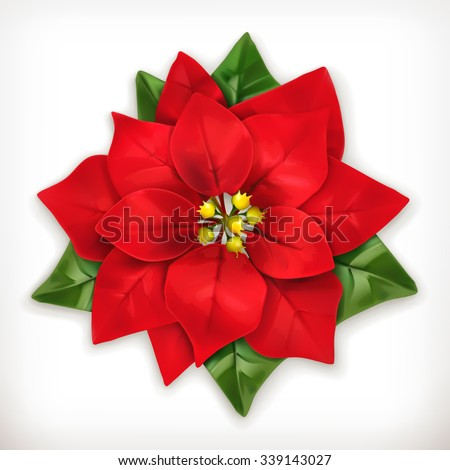 Poinsettia, Christmas Star vector icon