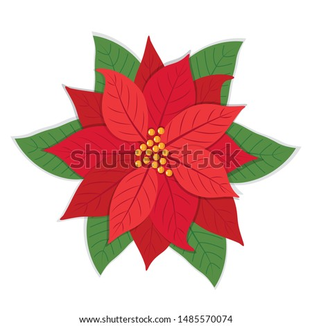 Poinsettia flowers isolated icon for Christmas or New Year greeting card design. vector illustration
