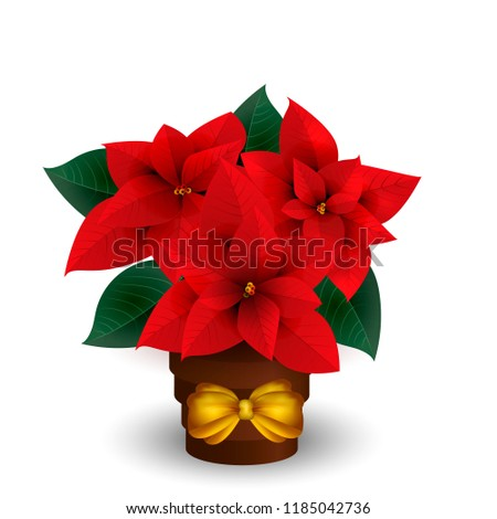 poinsettias for Christmas isolated on white background. Vector