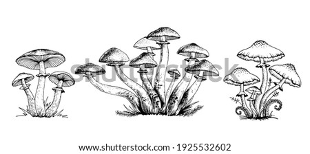 Poisonous mushrooms Vector illustration drawn by hand, family of inedible mushrooms Dangerous mushrooms, toadstool, fly agaric, white toadstool, family of mushrooms isolated on a white background Foto stock ©