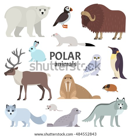 Polar animals. Vector collection of polar animals and birds, including polar bear, musk ox, seal, walrus, wolf, polar fox, reindeer, penguin and ermine, isolated on white.