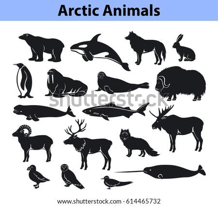 polar arctic animals collection
