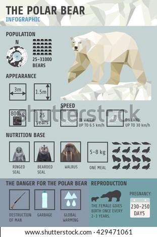 polar bears infographics flat