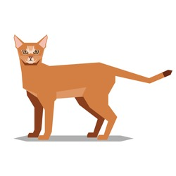 Polygonal abissinian cat on the white background
