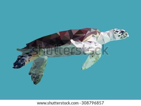 polygonal sea turtle  polygon