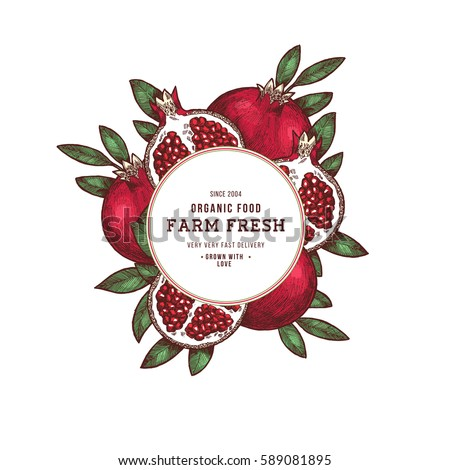 Pomegranate fruit vintage design template. Botanical fruit. Engraved pomegranate. Vector illustration