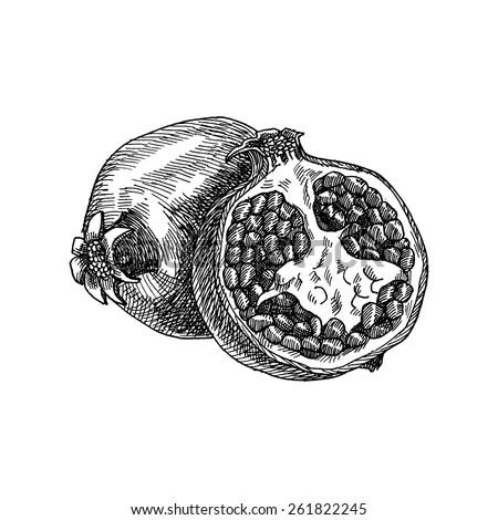 pomegranate white  vector hand
