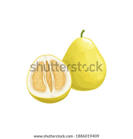 Pomelo fruit, tropical exotic citrus, vector isolated food icon. Pomelo, pummelo or shaddock fruits half cut and whole, tropic farm juicy exotic fruits harvest, sweet fruity dessert Foto stock ©