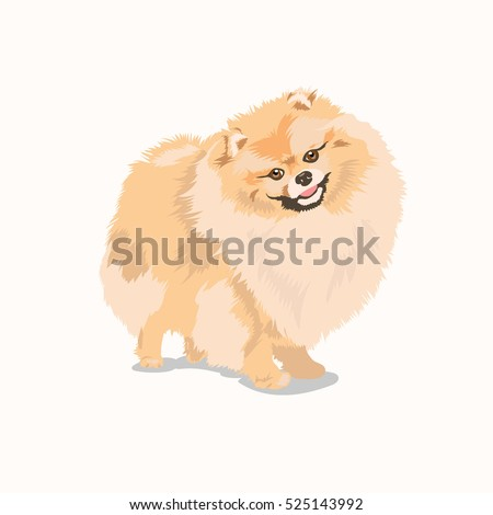 pomeranian dog at one color