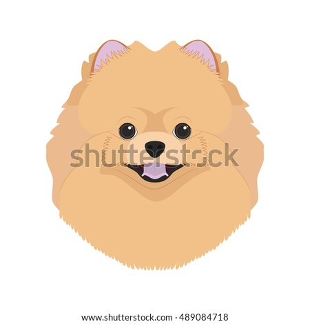 pomeranian dog isolated on