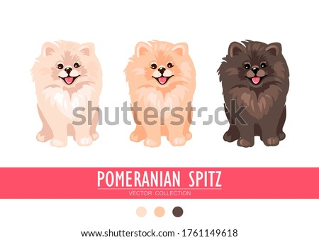 Pomeranian Spitz cream, orange and dark isolated on white background. Cute Poms puppies. Small German spitz. Little dogs. Vector stock illustration. Fluffy pets. Domestic animals in cartoon style. Stock foto ©
