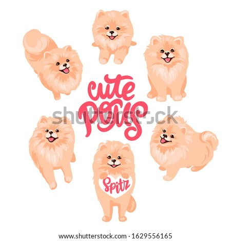 Pomeranian Spitz set isolated on white background. Cute Poms puppies. Small German spitz. Little Fluffy and fashion pets in cartoon style. Ideal for stickers, dog salon or animals shop logo. Stock foto ©