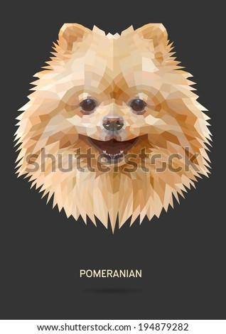 pomeranian vector polygon