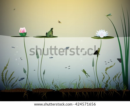 pond life  under the water
