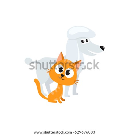 poodle dog dog and red cat