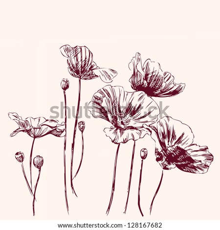 poppies flowers - vintage hand drawn vector illustration - stock vector