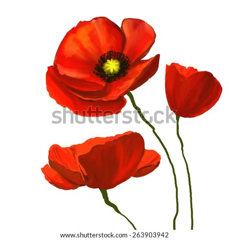 poppies vector illustration