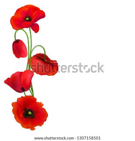 poppy beautiful bright