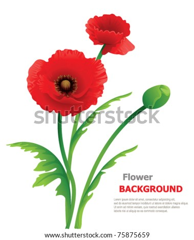 Poppy floral background