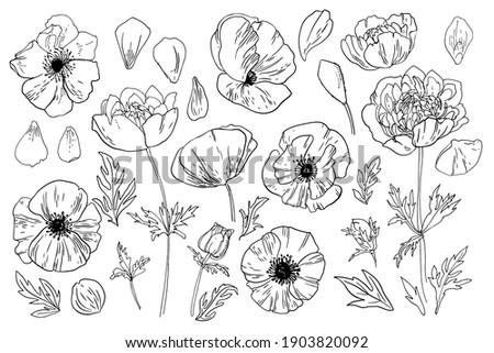 poppy flower in memory of the