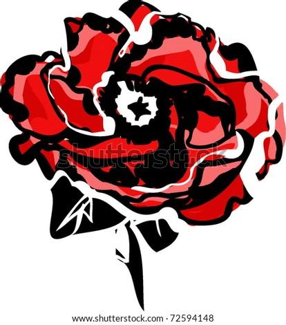 poppy flower on a white