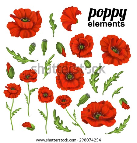 poppy flower red poppies