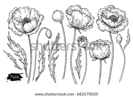 poppy flower vector drawing set