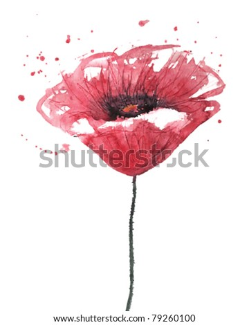 poppy flower  watercolor  vector