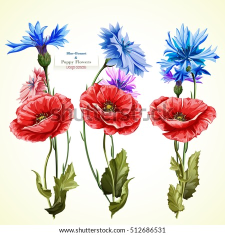 poppy flowers and cornflowers