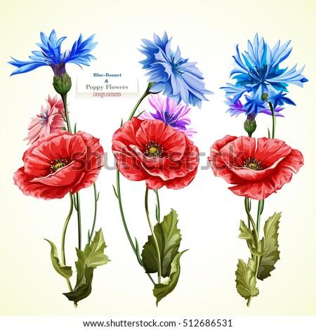 poppy flowers and cornflowers